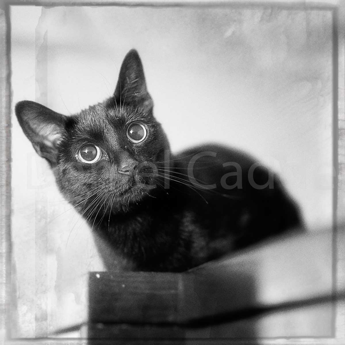 cat photograph with shallow depth of field and monotone processing