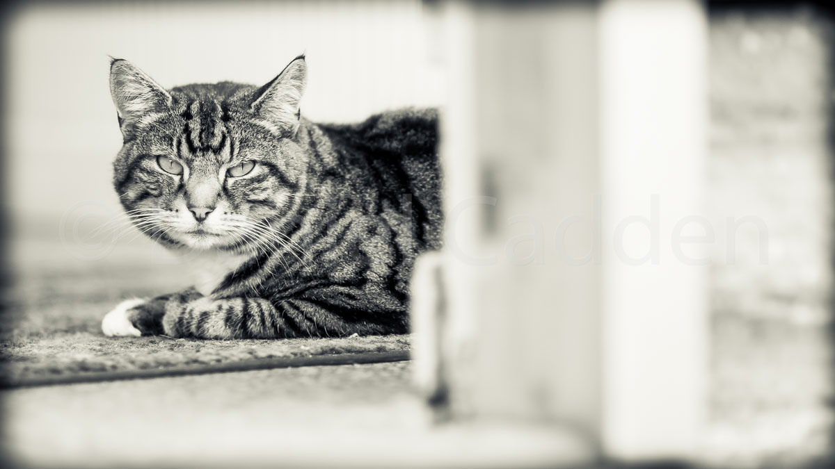 Photograph of a lowered cat