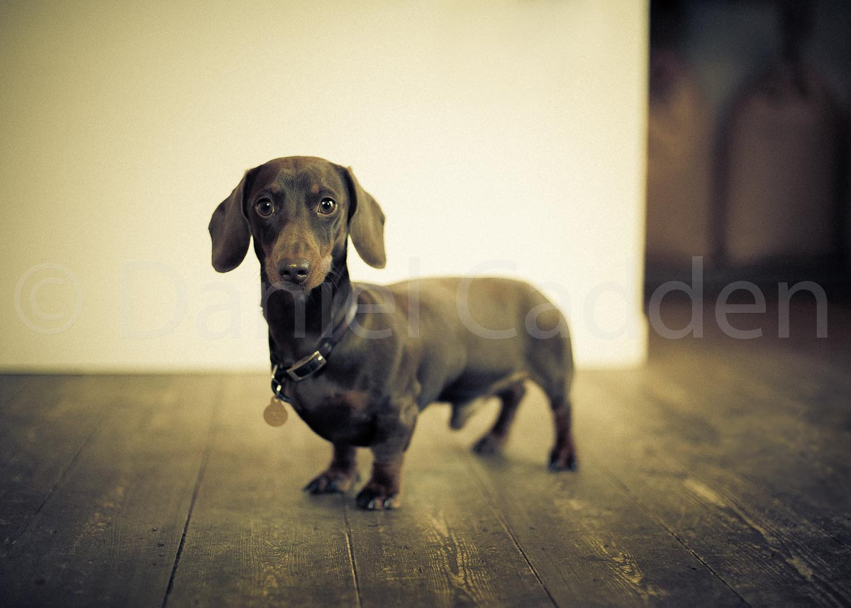 Photograph of a lowered dog